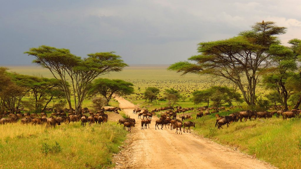 Wild animals migration on Serengeti plains, Tanzania