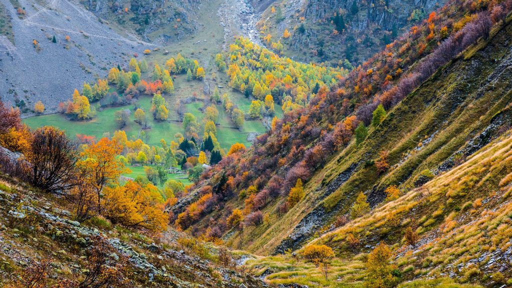 Autumn trees in a mountain valley in Écrins National Park, France
