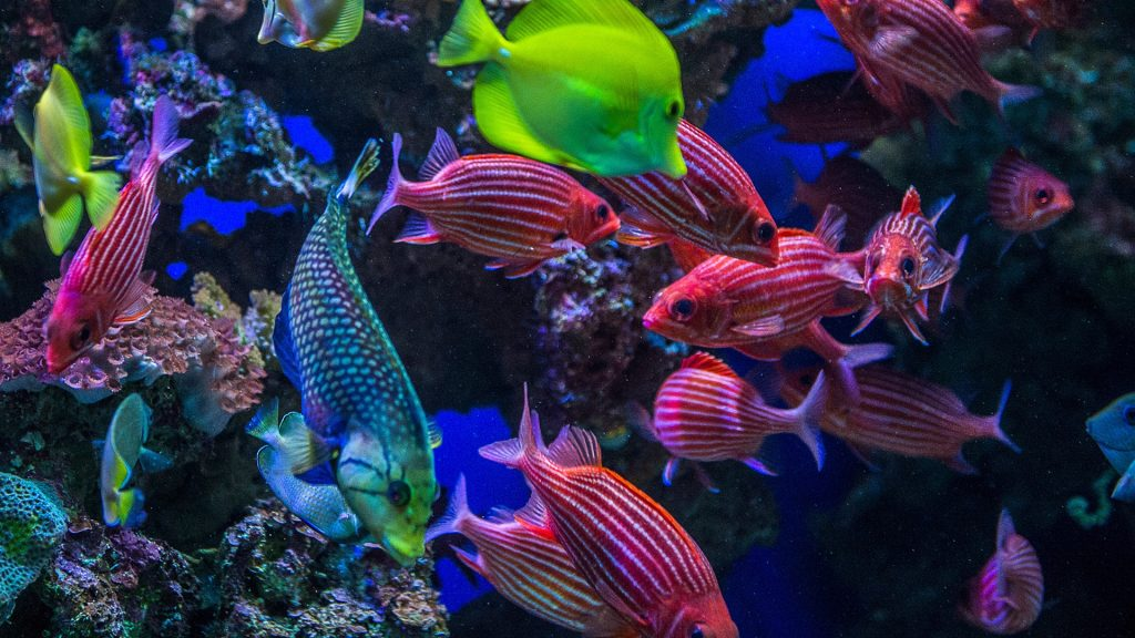 Underwater view of colorful tropical coral reef fish, Maui, Hawaii