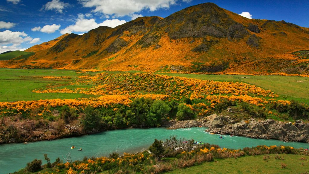 Yellow wildflowers surrounding Boyle River and nearby mountains, New Zealand