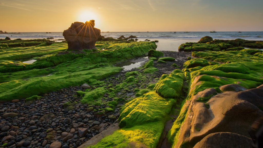 Rocks and moss in the morning at Co Thach beach, Tuy Phong, Binh Thuan province, Vietnam