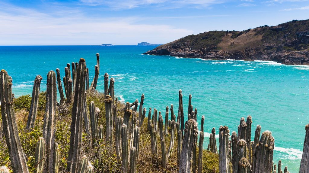 View of cacti and coast at Boca da Barra, Buzios, Rio de Janeiro, Brazil