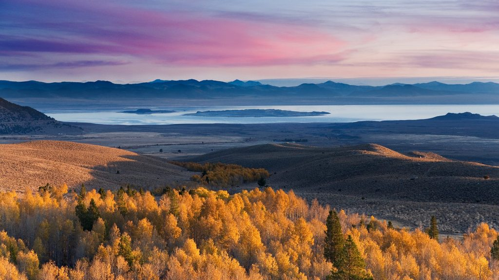 Yellow autumn aspens and Mono Lake at sunrise in California, USA