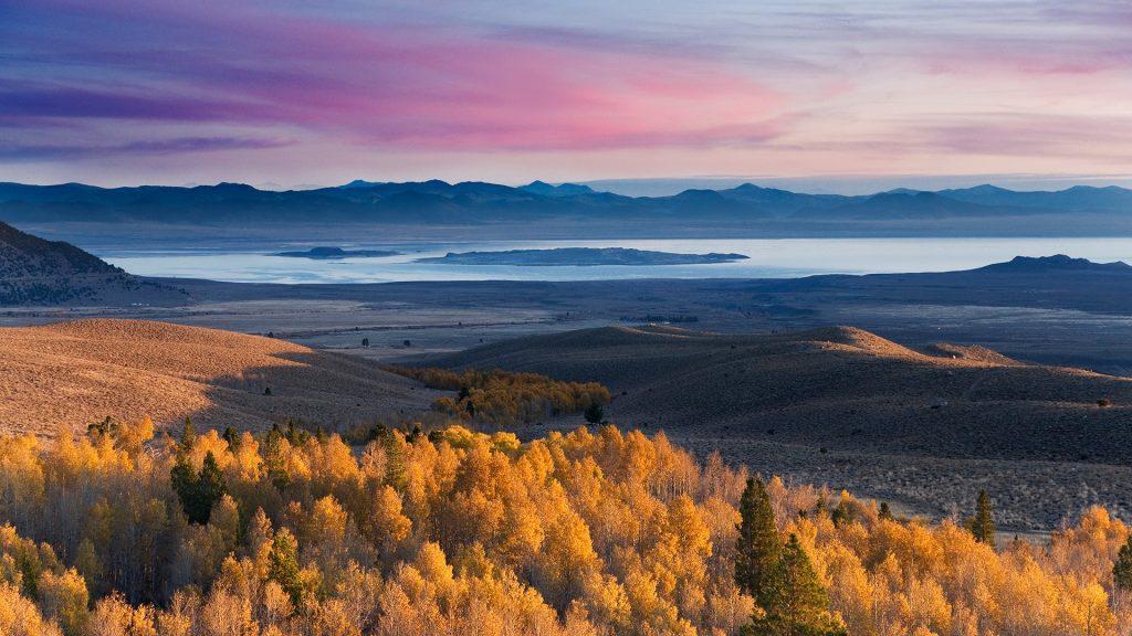 Yellow autumn aspens and Mono Lake at sunrise in California, USA