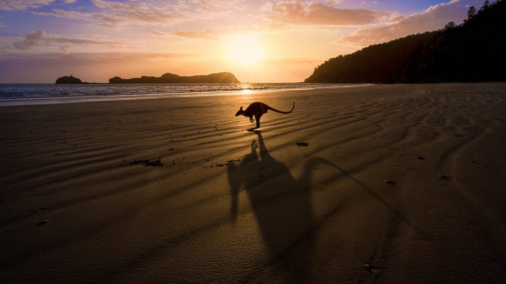 A kangaroo jumps in front of a sunrise over the beach, north Queensland, Australia