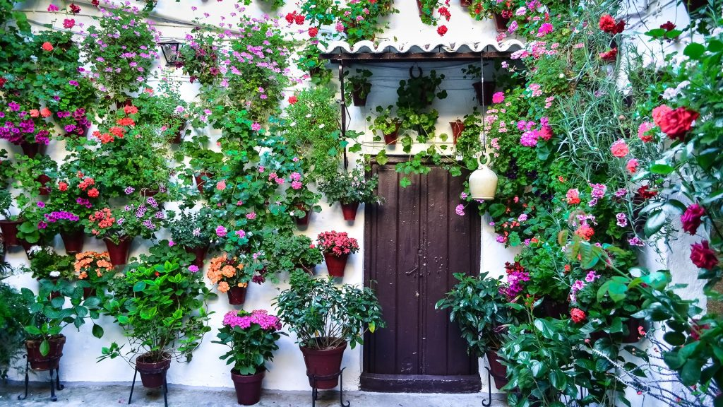 Typical patio with potted plants and flowers in Cordoba, Andalusia, Spain