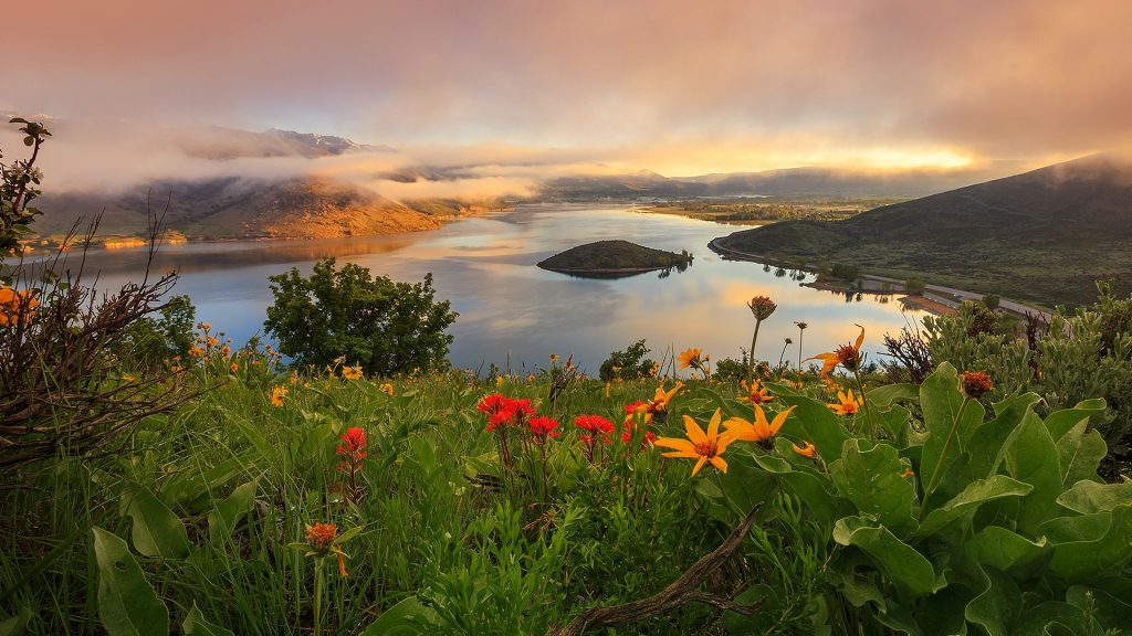 Sunrise with spring wildflowers in Heber Valley, Wasatch Mountains, Utah, USA