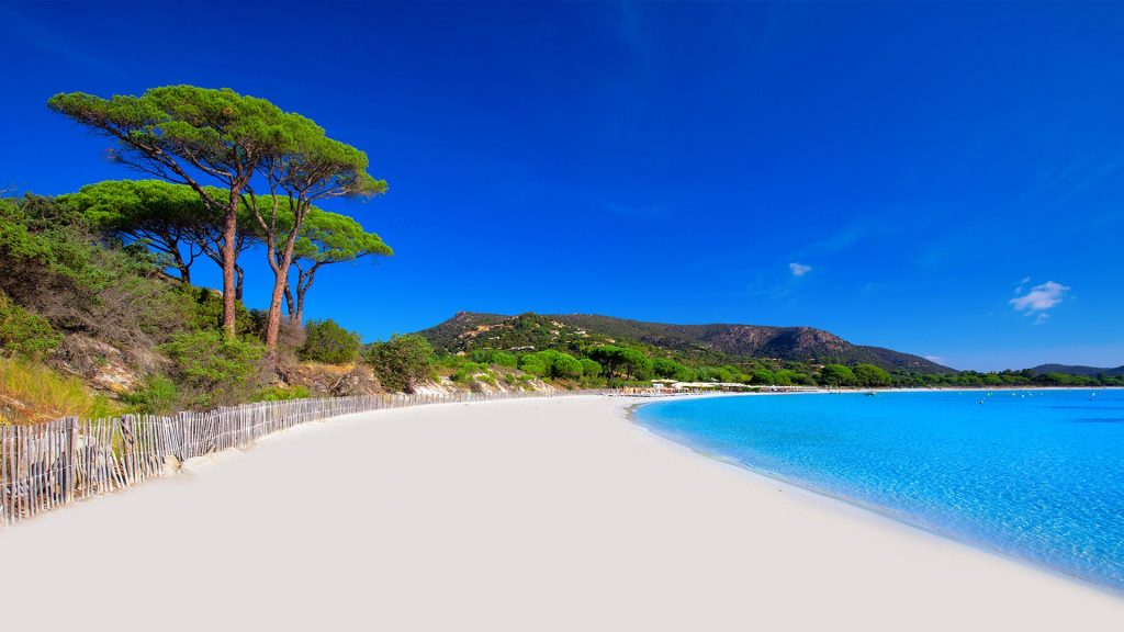 Palombaggia sandy beach with pine trees and azure clear water, Corsica, France
