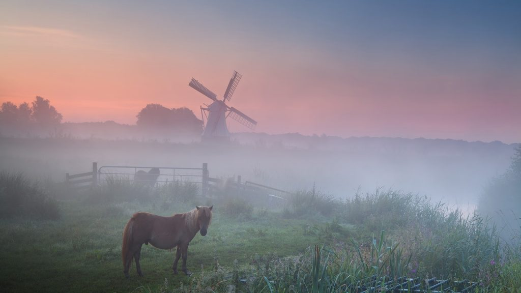 Summer sunrise with pony in fog on pasture and windmill, Groningen, Netherlands