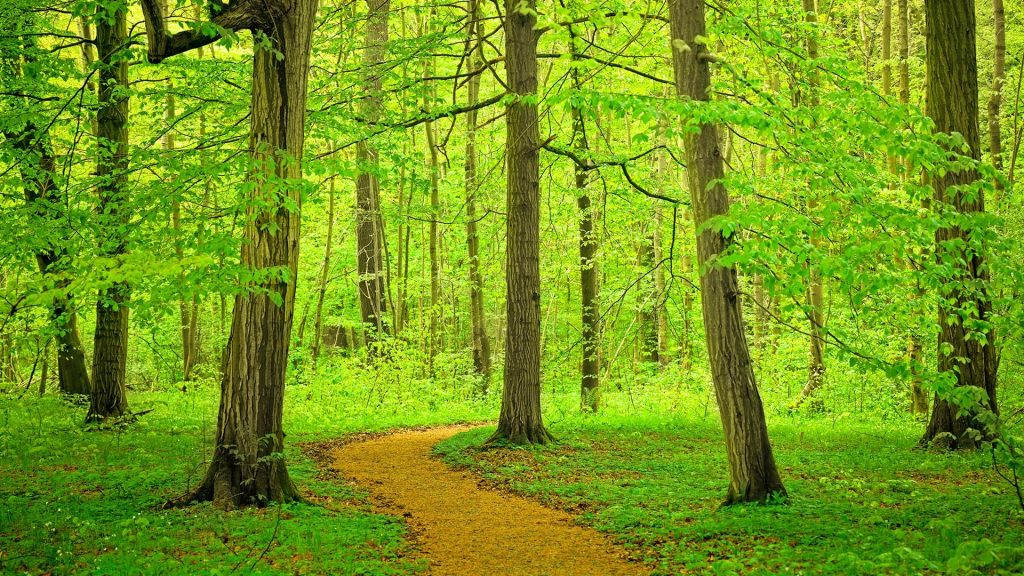 Path through beech tree forest, Germany