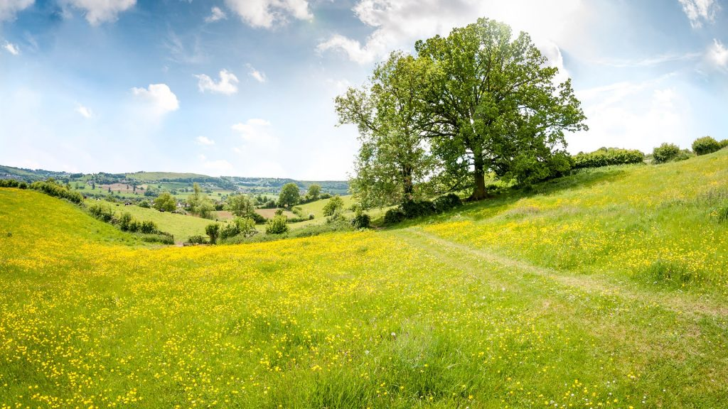 An oak tree in a beautiful rolling landscape in the Cotswolds, England, UK
