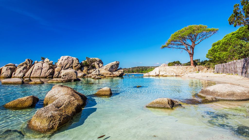 Famous pine tree near lagoon on Palombaggia beach, Porto-Vecchio, Corsica, France
