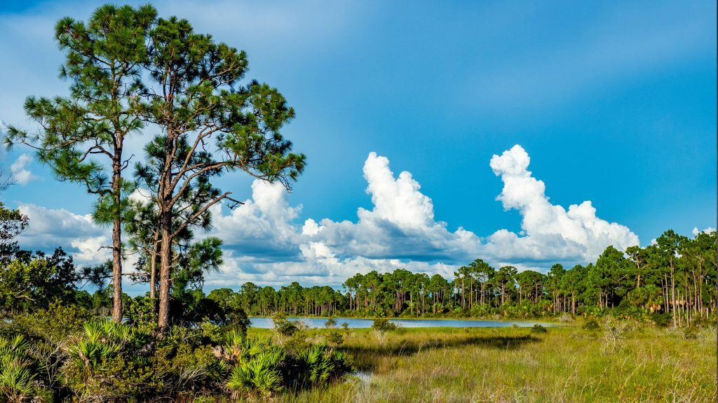 Clouds over Babcock-Webb Wildlife Management Area in Punta Gorda, Florida, USA
