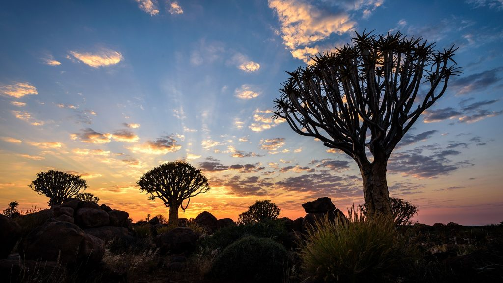 Sunrise at Quiver Tree Forest (Kokerboom Woud) in Namibia
