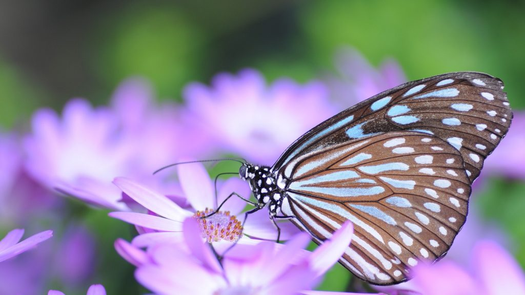 Butterfly sitting on purple flower, Itami, Hyogo, Japan