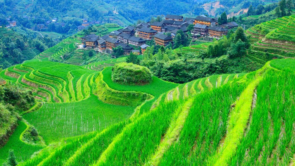 Dazhai village with rice paddy terraces in Longsheng, Guilin, Guangxi, China