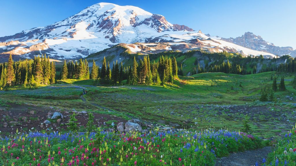 Alpine wildflowers along a path in Mount Rainier National Park, Washington, USA