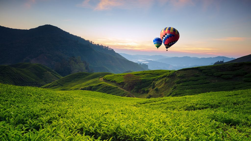 Balloons and tea valley view on sunrise at Cameron Highlands, Tanah Rata, Pahang, Malaysia