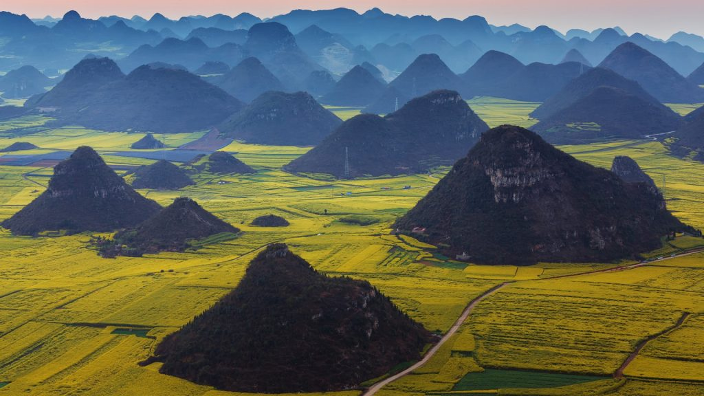 Blooming rapeseed field in Luoping, Yunnan Province, China