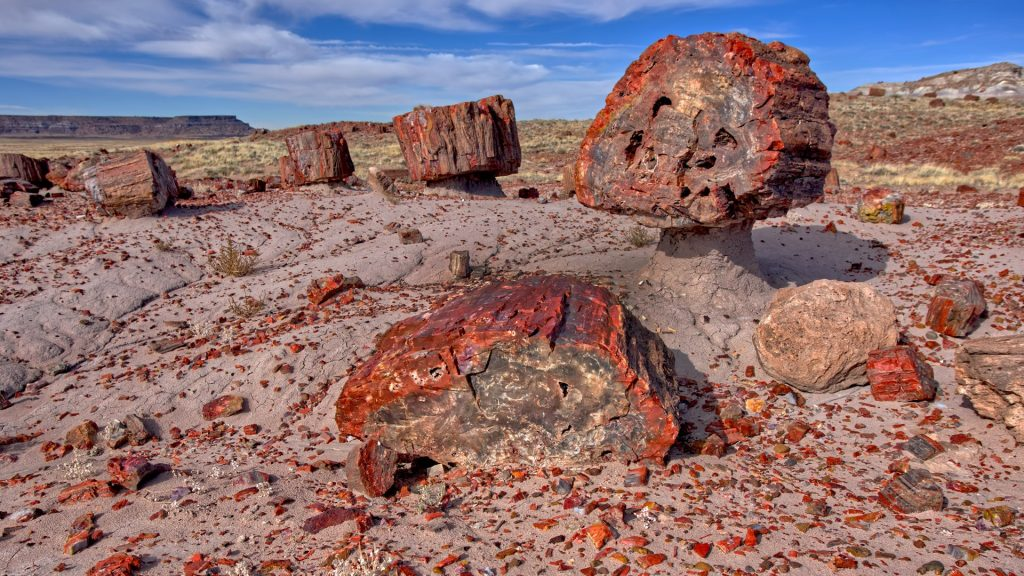 Petrified wood in the Jasper Forest of Petrified Forest National Park, Arizona, USA