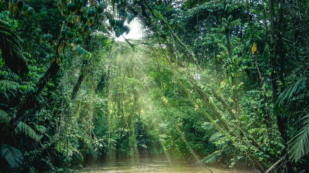 Rainforest view from a boat in canals, Tortuguero National Park, Limón Province, Costa Rica