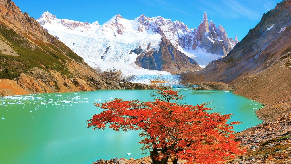 Autumn tree by the lake near Cerro Torre mountain, Los Glaciares National park, Argentina