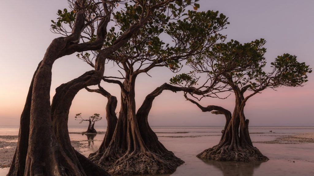 Mangrove trees at Walakiri Beach during sunset, Sumba Island, East Nusa Tenggara, Indonesia