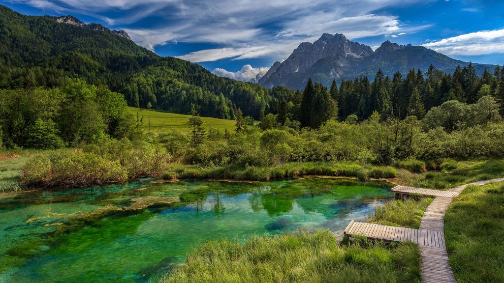 Lake and forest in Zelenci Springs nature reserve, Kranjska Gora, Upper Carniola, Slovenia