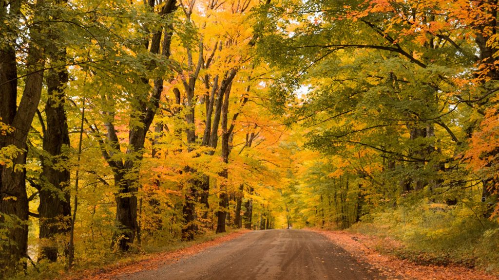 Country dirt road with autumn foliage, Vermont, New England, USA