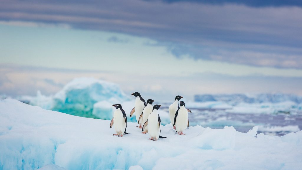 A group of Adelie penguins rest on vivid blue ice, Antarctica