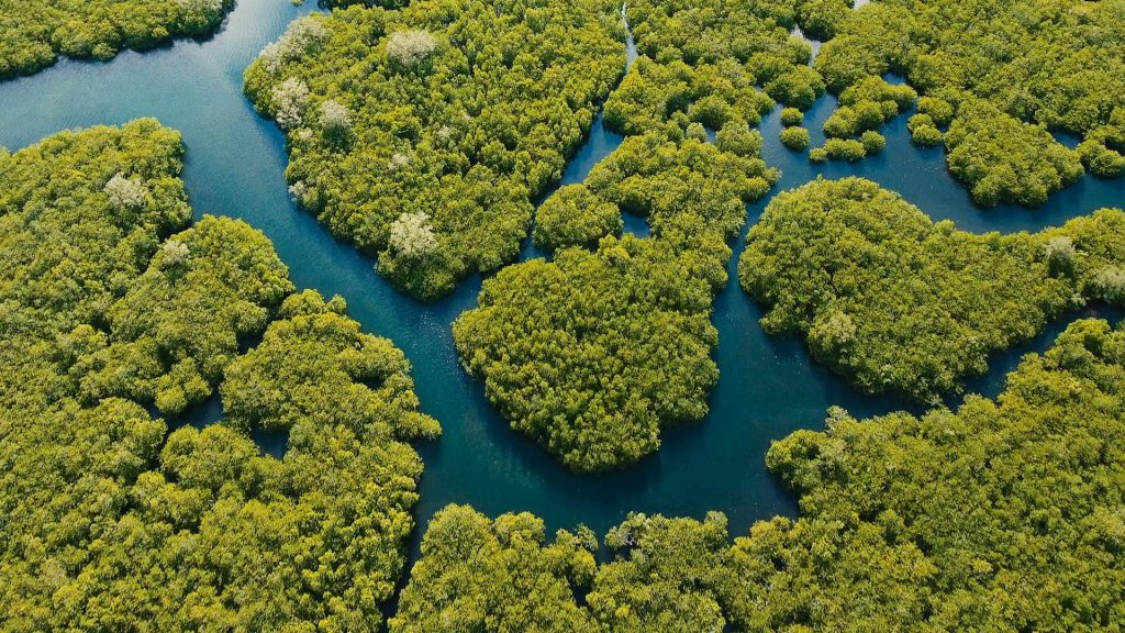 Aerial view of mangrove forest and river on the Siargao island, Philippines