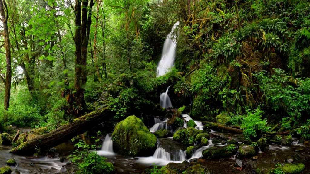 Merriman falls in Quinault Rain Forest, Olympic National Park, Washington, USA