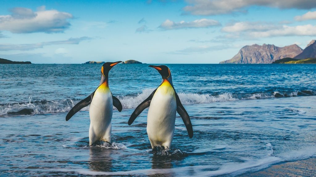 Seascape with king penguins at St. Andrews Bay, South Georgia Island