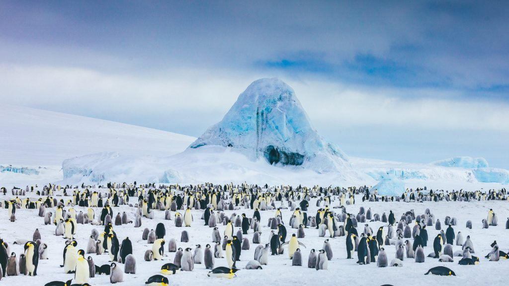Emperor penguin colony with frozen in icebergs as a backdrop, Antarctica
