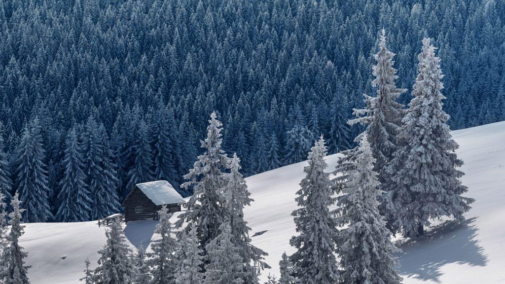 Winter mountain landscape with hut among snowy trees, Carpathians, Ukraine