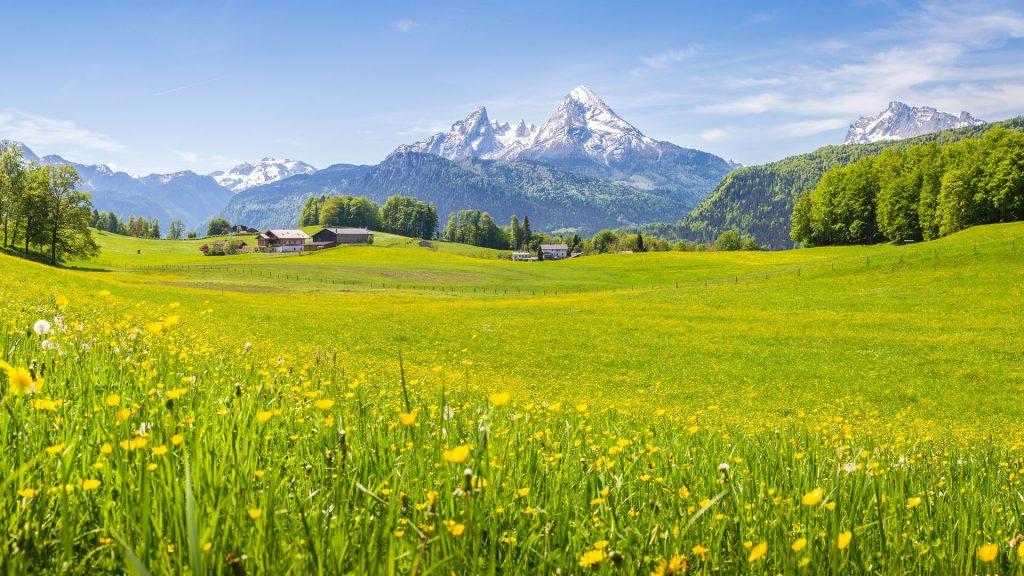 Springtime alpine meadows in the Alps, National Park Berchtesgadener Land, Bavaria, Germany