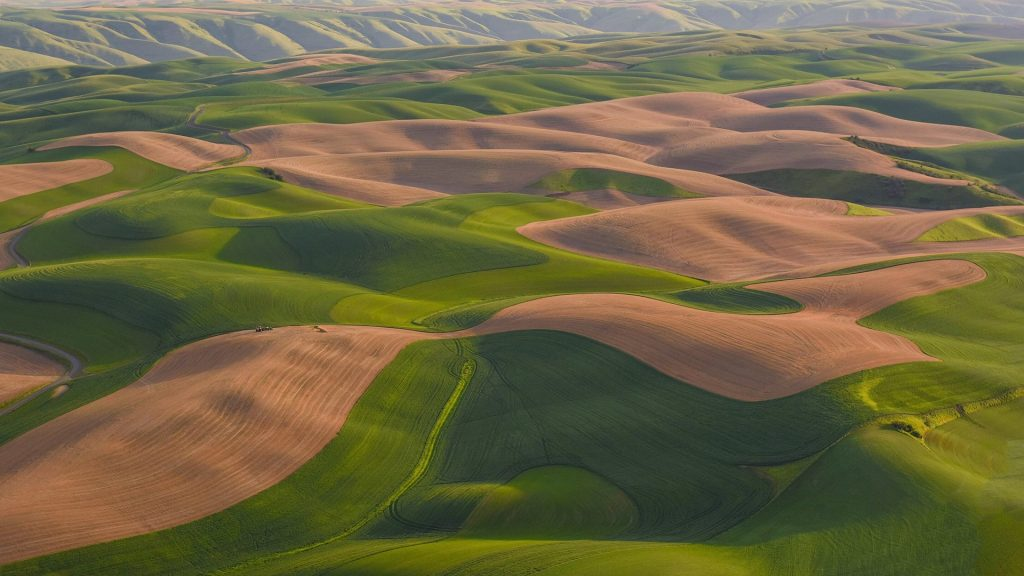 Interesting patterns and evening light on colorful rolling wheat fields, Washington State, USA