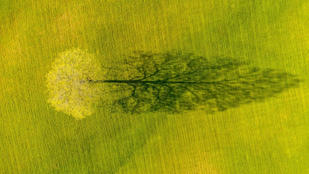 Shadow of a maple tree in spring in Weybridge, Vermont, USA