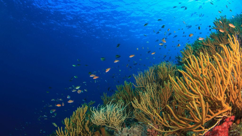 Fish swimming in coral reef, Banda Sea, Indonesia