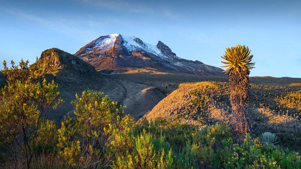 Volcano Tolima with vegetation frailejones (Espeletia), Los Nevados National Park, Colombia