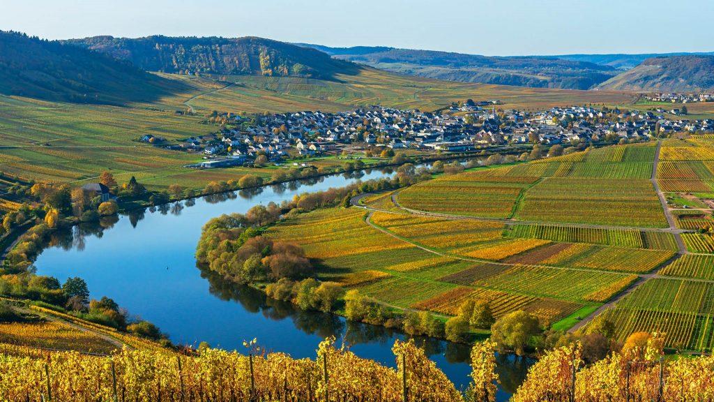 Moselle River Bend view near Trittenheim towards Leiwen, Rhineland-Palatinate, Germany