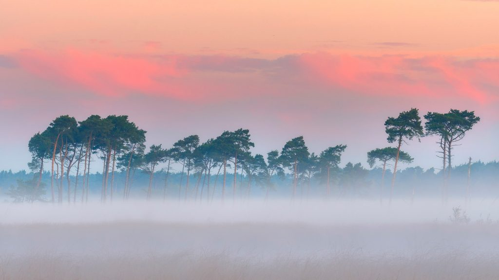 Trees against sky at misty conditions on the Kalmthoutse Heide in Belgium